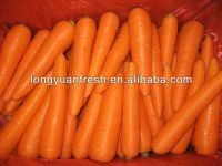 China New Crop Carrot