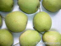 Chinese Shandong Pear
