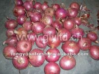 China Red Onion