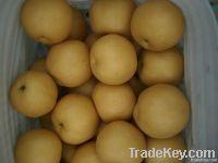 Fresh Fengshui Pears