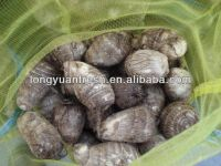 Fresh Chinese Small Size 2012 Crop Taro For Sale