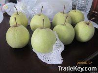 Chinese Su Pear