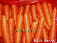 Carrot Carrot