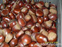 Fresh Nut