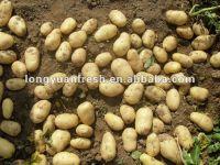 China Holland Potato