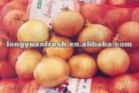 New Crop Yellow Onion