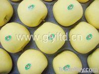 Fresh Yellow Apple