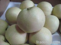 Fresh Emerald Pears