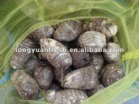 Fresh Chinese Taro 2012 Crop