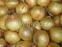 China Onion