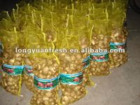 Taro Wholesale