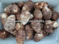 China Taro For Sale