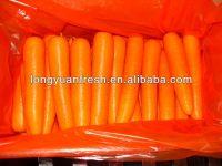 Fresh Long Shape Carrot