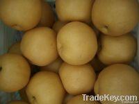 Fresh Fengshui Pear
