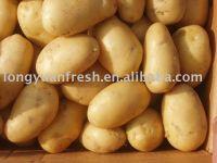 Chinese Holland Potato