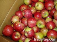 Fresh Apple Jiguan