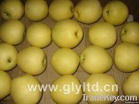 Fresh Golden Pears