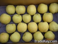 Chinese Early Su Pear