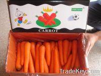Carrots Carrots Fresh