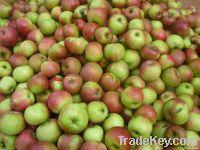 Fresh Chinese Jiguan Apple