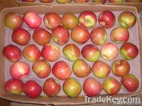 Apple Jiguan
