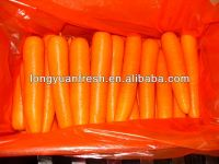 China Fresh Long Shape Carrot