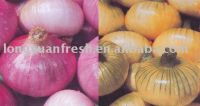 Fresh New Crop Chinese Red And Yellow Onion