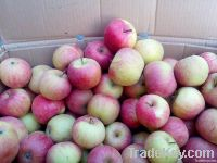 Fresh Guoguang Apple