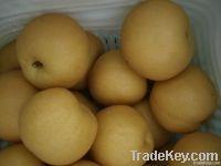 Fengshui Pears