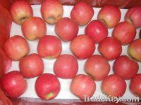 Lady Pink Apple