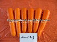 Chinese Organic Carrot