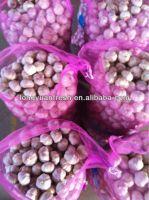 China White Garlic