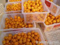 Chinese Baby Mandarine