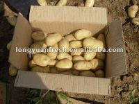 China Yellow Potato
